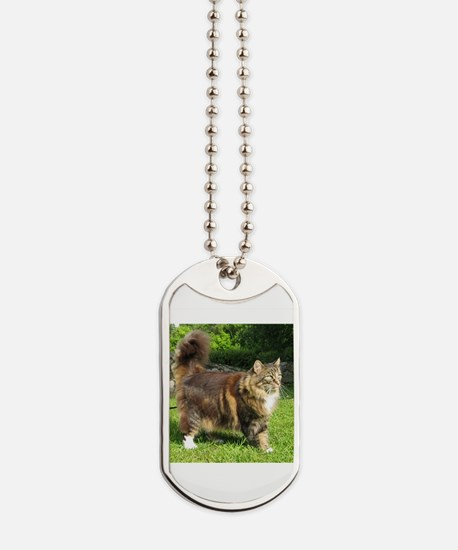 norwegian forest cat full tabby Dog Tags
