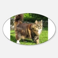 norwegian forest cat full tabby Decal