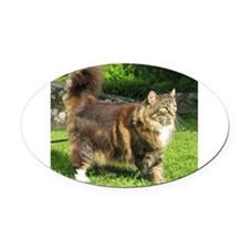 norwegian forest cat full tabby Oval Car Magnet