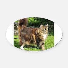 norwegian forest cat full tabby Oval Car Magnet