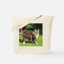 norwegian forest cat full tabby Tote Bag