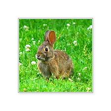 bunny-clover_j.jpg Sticker
