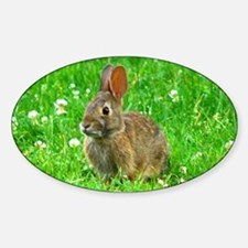 bunny-clover_j.jpg Decal
