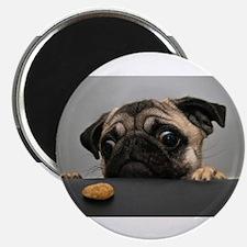 Cute Pug Magnets