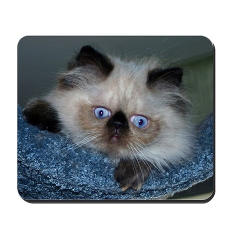 Blue-Eyed Himalayan Kitten Mousepad