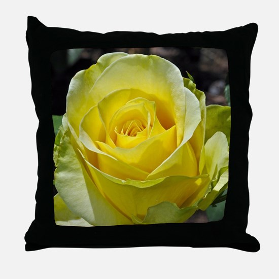 Singe yellow rose in sunlight Throw Pillow