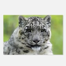 Leopard010 Postcards (Package of 8)