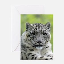 Leopard010 Greeting Cards