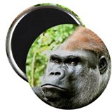 Earnie gorilla 10 Pack