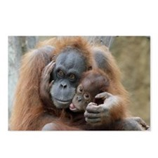 OrangUtan001 Postcards (Package of 8)