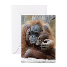 OrangUtan001 Greeting Cards