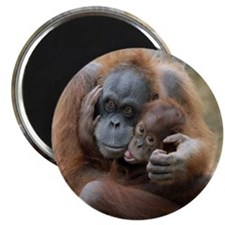 OrangUtan001 Magnets