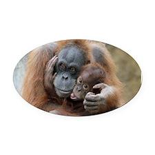 OrangUtan001 Oval Car Magnet