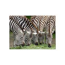 Zebra009 5'x7'Area Rug