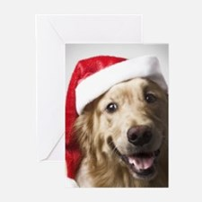 Cool Color paws Greeting Cards (Pk of 20)