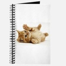 Funny Orange cats Journal