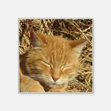 """Funny Cat designs Square Sticker 3"""" x 3"""""""