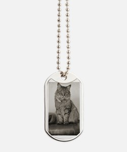 Beautiful Vintage Maine Coon Kitty Dog Tags