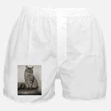 Beautiful Vintage Maine Coon Kitty Boxer Shorts