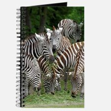 Zebra_2014_1101 Journal