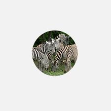 Zebra_2014_1101 Mini Button (10 pack)