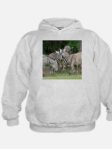 Zebra_2014_1101 Hoodie