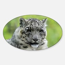 Leopard007 Decal