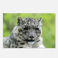 Leopard007 Postcards (Package of 8)