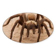 Tarantula Spider Decal