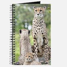 Cheetah002 Journal