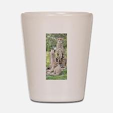 Cheetah002 Shot Glass
