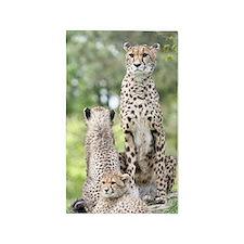 Cheetah002 Area Rug