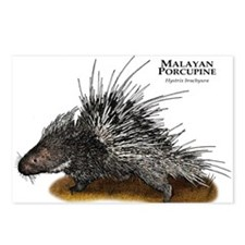Malayan Porcupine Postcards (Package of 8)