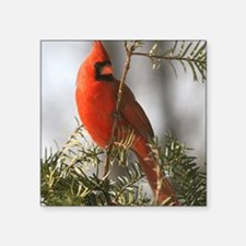"Winter Cardinal Square Sticker 3"" x 3"""