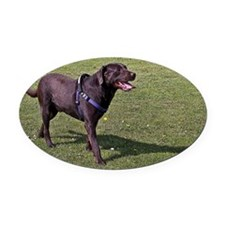 Hot Chocolate Lab A - Oval Car Magnet