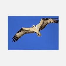 Osprey Flight Magnets