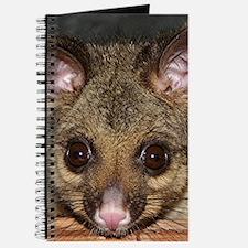 Cute Australian Possum with big eyes Journal