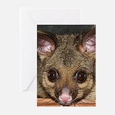 Possum with big eyes Greeting Cards