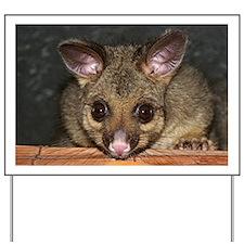 Cute Australian Possum with big eyes Yard Sign