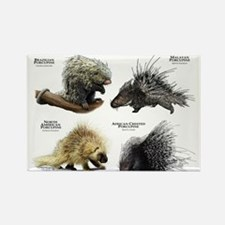 Porcupines of the World Rectangle Magnet