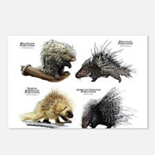 Porcupines of the World Postcards (Package of 8)