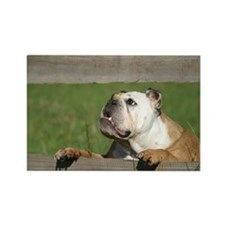 English bulldog Rectangle Magnet