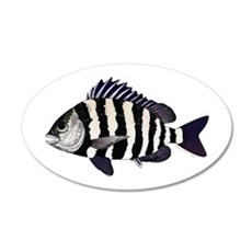 Sheepshead porgy Wall Decal