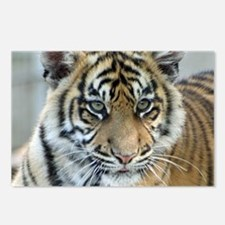 Tiger011 Postcards (Package of 8)