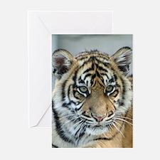Tiger011 Greeting Cards