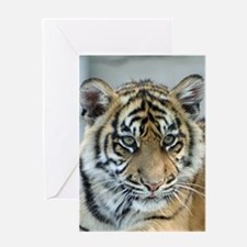 Tiger011 Greeting Cards