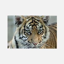 Tiger011 Magnets