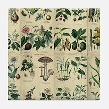 Illustrated Flora Tile Coaster