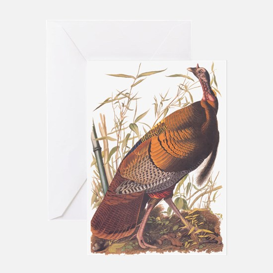 Audubon Wild Turkey Greeting Cards