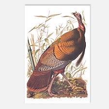 Audubon Wild Turkey Postcards (package Of 8)